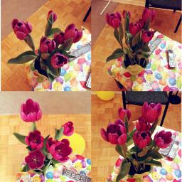 dailyinspiration flower photography beautiful tulips