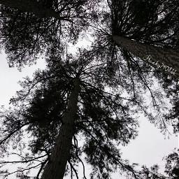 getgoofy trees photography