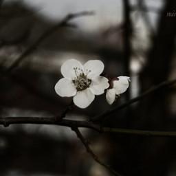 emotions flower nature spring love