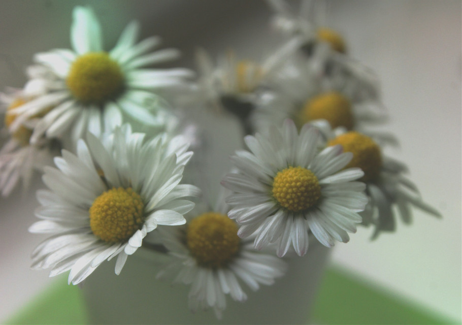 🌼 Daves Daily Daisy 🌼 Hello and good morning my fellow Picsartist's hope you all had a great weekend and have a Happy Monday 👋 👍 👌 😀 🌼 💕 #nature #daisy #flower #happiness #love #friends #adjusttool #lightmask #film #photography