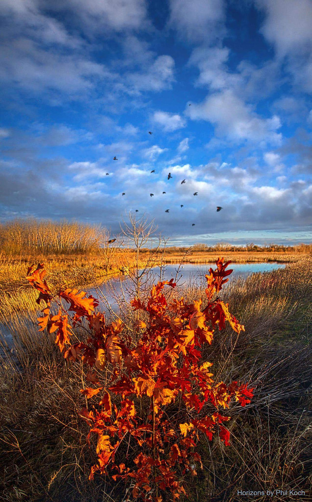 """"""" Blackbirds Singing """" - Wisconsin Horizons by Phil Koch.  #inspiration #colorful #nature #photography #spring #canon #country #rural #mood #peace #sunrise #weather #park #trees #hike #flight #birds"""