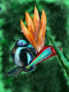 wdprainyday drawing artistic bird nature