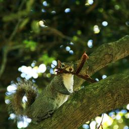 squirrel nesting spring nature