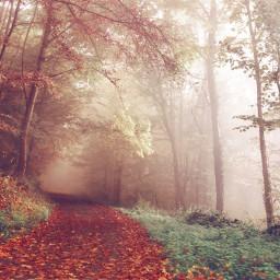 freetoedit road nature mist fog