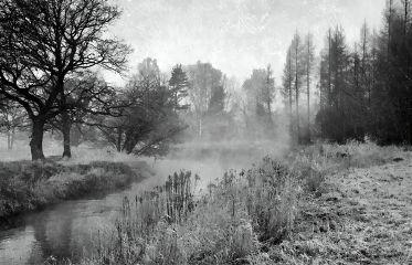 blackandwhite nature photography