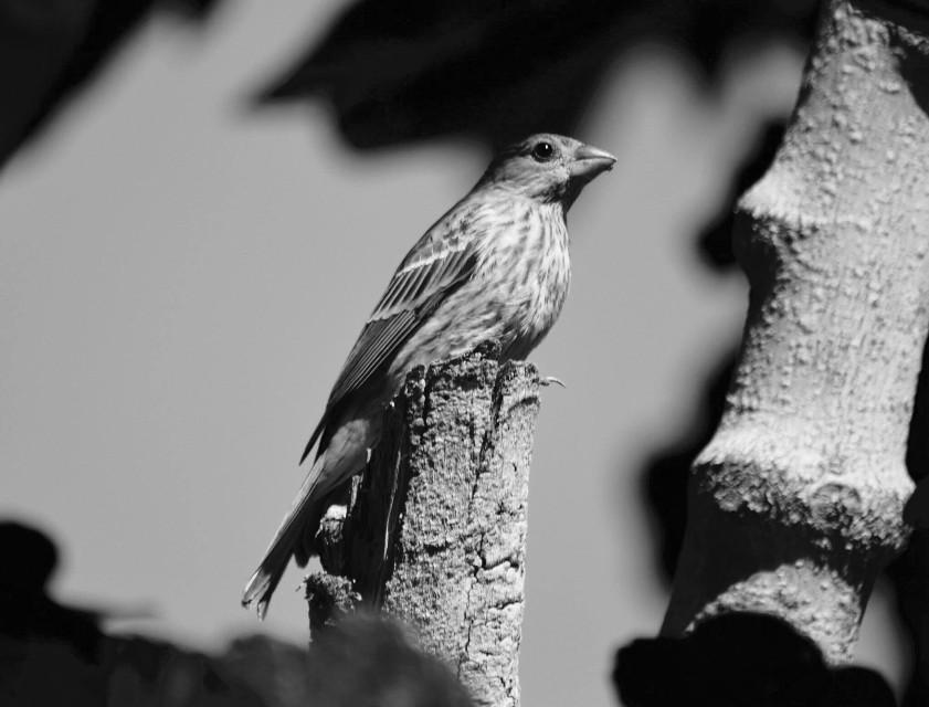 #ig_cameras_united    #icu_bw #california  #birds #nature #photography