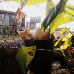 cat pets pet comfort plants
