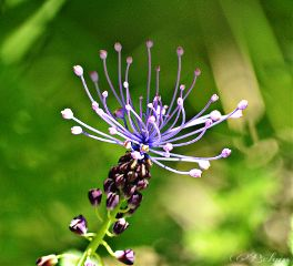 spring purple flower nature photography