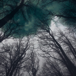 comiceffect freetoedit madewithpicsart cloudy forest