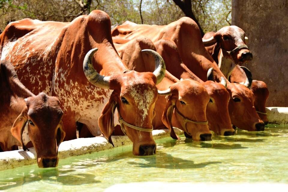 #animals #water #interesting #travel #photography
