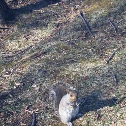 squirrel park canada interesting beautiful