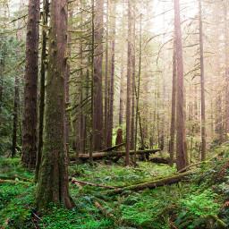 wpptrees freetoedit nature colorful summer travel explore Oregon hiking