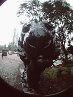 mobilephotowalk macro mexico lion statue freetoedit