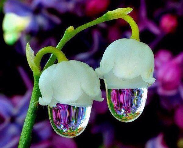 #macro #interesting  #flowers #nature #rain #emotions #spring #upclose #photography
