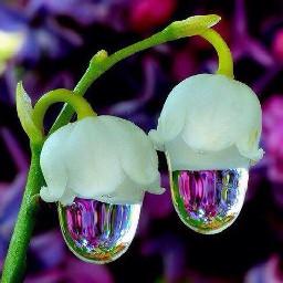 macro interesting flowers nature rain