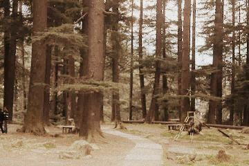 wpptrees travel memories manali oldphoto freetoedit