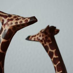 photography giraffes tiltshift minimal