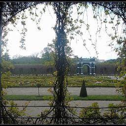 maze labirinrh hedge arch tulips