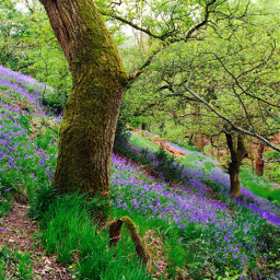 bluebells forest spring color colorful