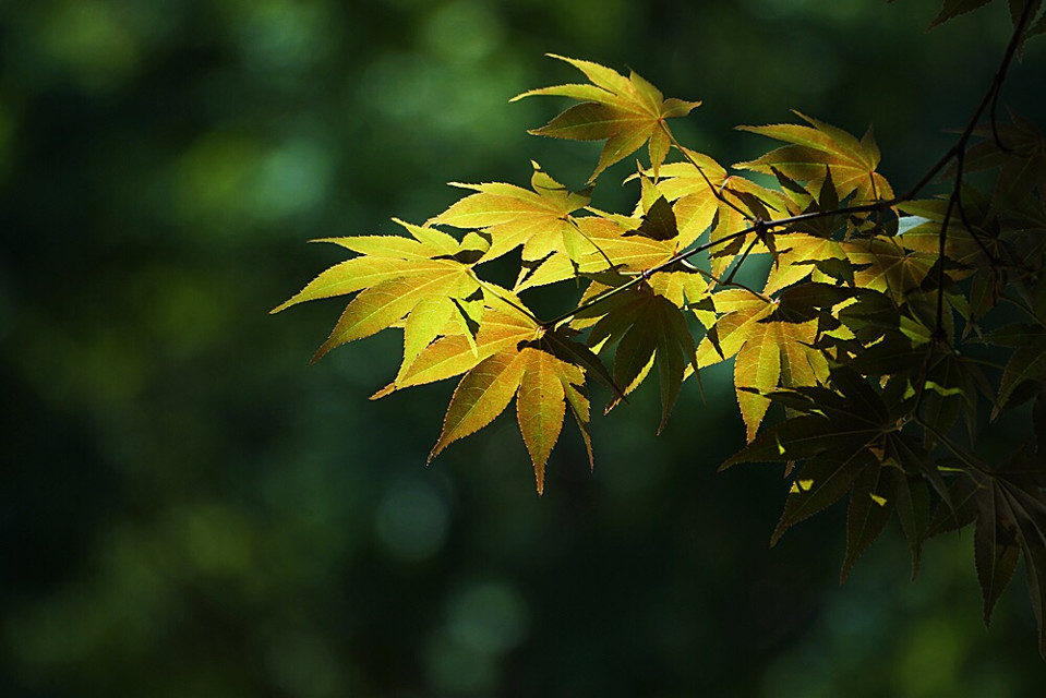 #interesting  #leaves  #colorful