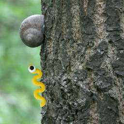 freetoedit tree forest nature snake