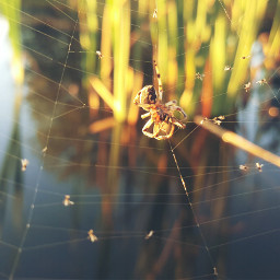 nature mygarden spider naturephotography