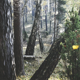 oilpaintingeffect forest nature naturephotography