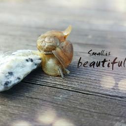 nature naturephotography snail snailhouse