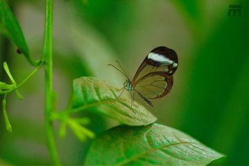 butterfly macro art london insects freetoedit